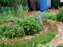 Small Picture Combining Vegetables and Flowers in Your Garden DIY