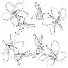 白い背景に分離された輪郭のスタイルで飛んでいるプルメリアやコリブリ ハチドリ花と設定します夏デザイ