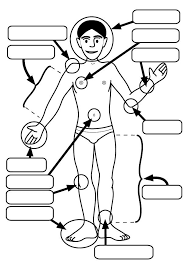 Small Picture Human Body Parts Coloring Pages For Kids Special Offers