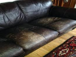 leather couches and dogs leather couch dogs best leather sofa cover for dogs