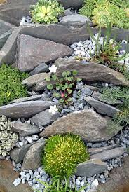 rock garden plants wrp sce ny nd mke for shade best zone 6 rock garden plants