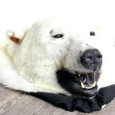 polar bear rug and polar bear skin rug good looking faux polar bear rug with head faux fur polar polar bear rug taxidermy