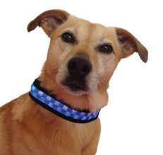 equisafety polite dog collar medium
