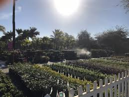 photo of casaplanta garden center miami fl united states plants for all