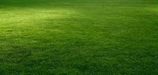grass. Modren Grass Grass Scenic View Of A Fresh Grass Lawn Royalty Free Stock Photo Inside Grass