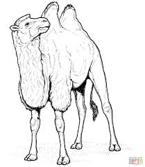 Small Picture Coloring Pages Realistic Bactrian Camel Coloring Page Free
