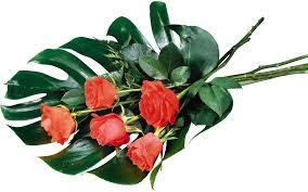 desktop wallpaper flowers high resolution. Exellent High Rose Desktop Wallpaper Flower Highdefinition Television 1080p  Monstera In Flowers High Resolution