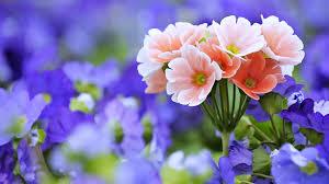 beautiful german bavaria flowers in garden