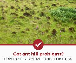how to get rid of ant hills 2021