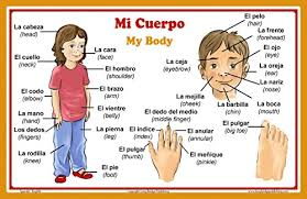 Human Body Parts Chart In English Long Bridge Publishing Spanish Language School Poster Words About Parts Of The Body Wall Chart For Home And Classroom Bilingual Spanish And