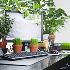 plants for office space.  office office space decorated with plants on plants for space r