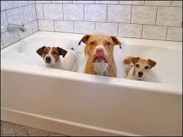 bathroom remodeling washington dc. Budget Bathroom Remodeling Company Ideas Maryland Washington DC N. Virginia Family Dogs Getting A Dc