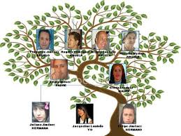 Resultado De Imagen Para Como Hacer Arbol Genealogico