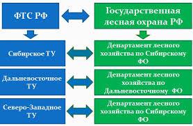 ДИПЛОМНАЯ РАБОТА Тема работы pdf соответственно повысит контроль за объемами экспортируемых пиломатериалов 6