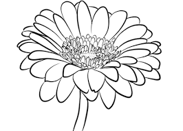 Small Picture Gerbera Daisy coloring page Free Printable Coloring Pages