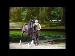 Freiheitsdressur Pferd Show Freiheit Dressur Vertrauen Reiten