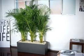 Best indoor plants for office Tall The Alluring Best Plants For Office With No Windows Decorating With Best Indoor Plants For Office Adammayfieldco 7223 Above Is One Of Pictures Of Home Deco Plantscapers The Alluring Best Plants For Office With No Windows Decorating With