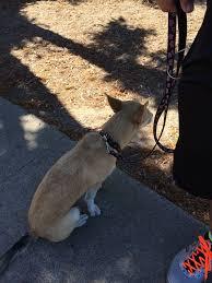 golden state humane society veterinarians 11901 gilbert st garden grove ca