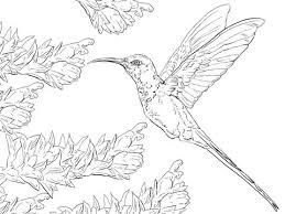 Small Picture The 25 best Hummingbird colors ideas on Pinterest Hummingbird