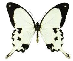 Moth Identification Chart Butterfly Identification Chart Butterfly House