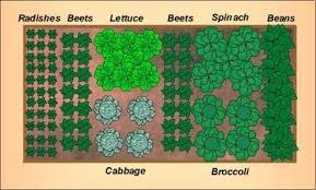 Garden Plan Layouts Small Vegetable Garden Layout Jasmine Garden