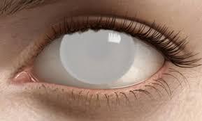 essay on blind people