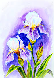 irises watercolor painting stock photo 24524065