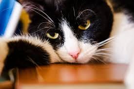 snake bites on cats. Plain Snake Snake Bites In Cats On Wag