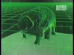 tardigrade actual size the water bear tardigrade the most extreme animal on our planet