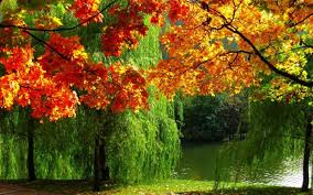 High Definition Pictures Forest Nature Autumn Leaves River Ultra High