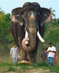 Baby Elephant Images Kerala
