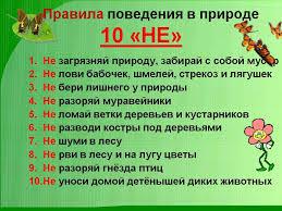 Детский сад № Правила поведения в природе Правила поведения в природе
