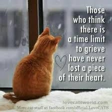 Loss Of A Cat Quotes Interesting Pin By Anne Coyle On Quotes Pinterest Kitty Cat And Bombay Cat