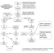 Honey Processing Flow Chart Efficient Sampling 101 Flowcharts And Protocols For Multi