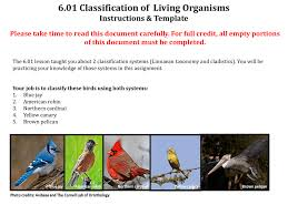 Blue Jay Robin Cardinal Finch And Pelican Taxonomy Chart 6 01 Classification Of Living Organisms Instructions