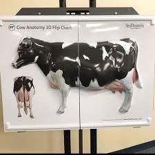 Cattle Chart Cow Anatomy 3d Flip Chart