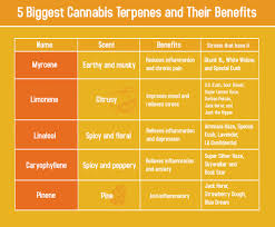 Cannabis Strain Chart List Of Major Terpenes And Their Health Benefits Chart