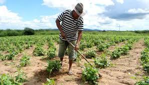 Resultado de imagem para agricultor do campo sorrindo fotos