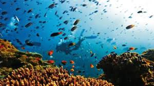 Image result for photo of the great barrier reef