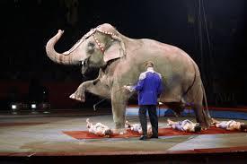 these 6 circuses still abuse animals peta2