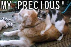 my precious on Pinterest | Meme, Hairless Cats and Lord Of The Rings via Relatably.com