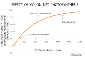 Co2 To O2 Conversion Chart Cannabis And Co2 Why Plants Suffer If They Dont Get At