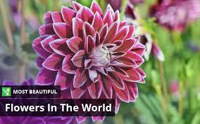 top 10 most beautiful flowers in the