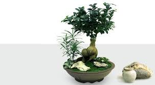 Office feng shui plants Bamboo Plant Feng Shui Indoor Plants Bring Energy To Your Home And Office Slideshare Feng Shui Indoor Plants Bring Energy To Your Home And Office Sizbub