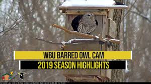 Image result for live owl web cam