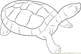 Small Picture Burmese Animal Coloring Pages Burmese Roofed Turtle Coloring Page