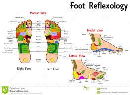 Cranial Reflexology Chart Reflexology Foot Chart Stock Vector Illustration Of