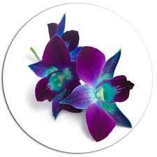 deep purple orchid flowers on white oil painting print on metal  on purple orchid wall art with designart deep purple orchid flowers on white oil painting print
