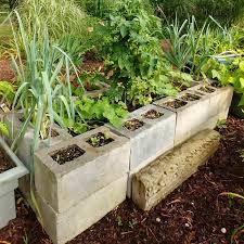 raised bed vegetable garden concrete