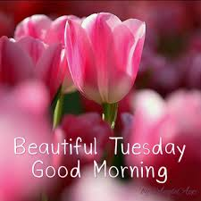 beautiful tuesday good morning pictures photos and images for facebook and twitter